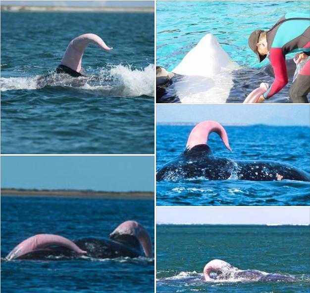 """Você vai rir quanto desvendar o que são estes """"monstros marinhos"""""""