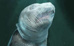 Campanha chocante usa imagens gráficas para mostrar o mal que a poluição plástica razão aos animais marinhos